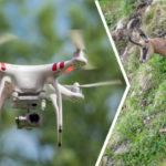 [:de]Rücksicht auf Wildtiere beim Fliegen mit Drohnen[:fr]Faire voler son drone en respectant la faune [:]